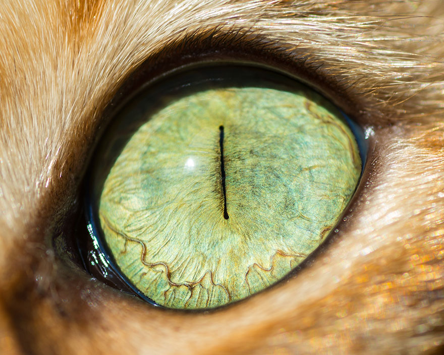I-Take-Hypnotizing-Macro-Shots-Of-Cats-Eyes-Up-Close-1