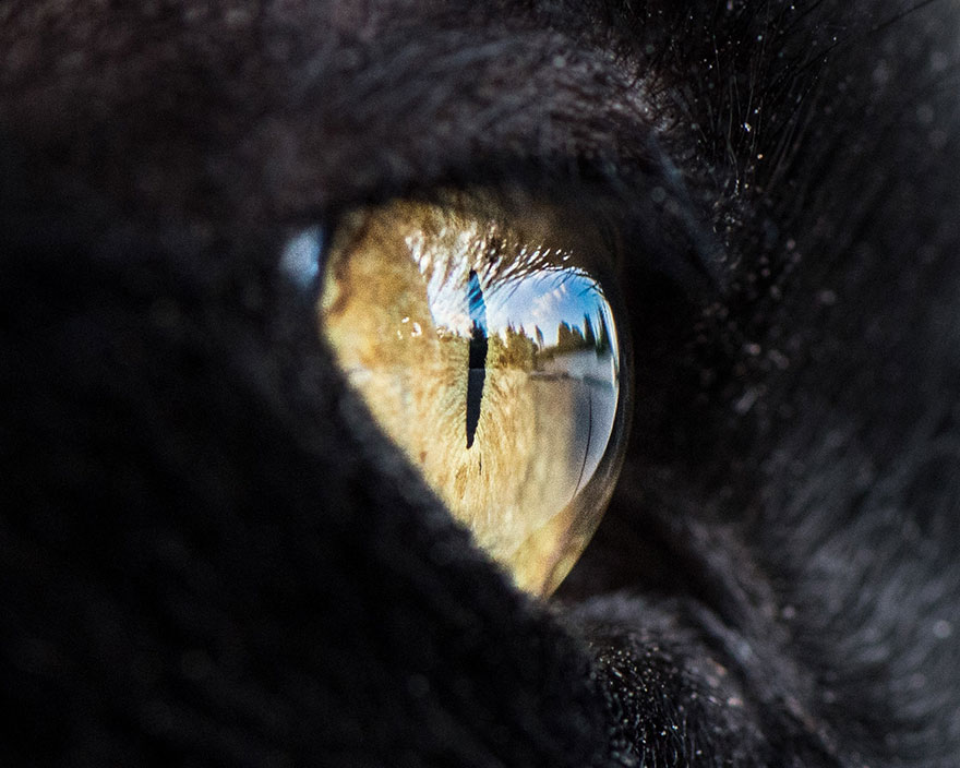 I-Take-Hypnotizing-Macro-Shots-Of-Cats-Eyes-Up-Close-10
