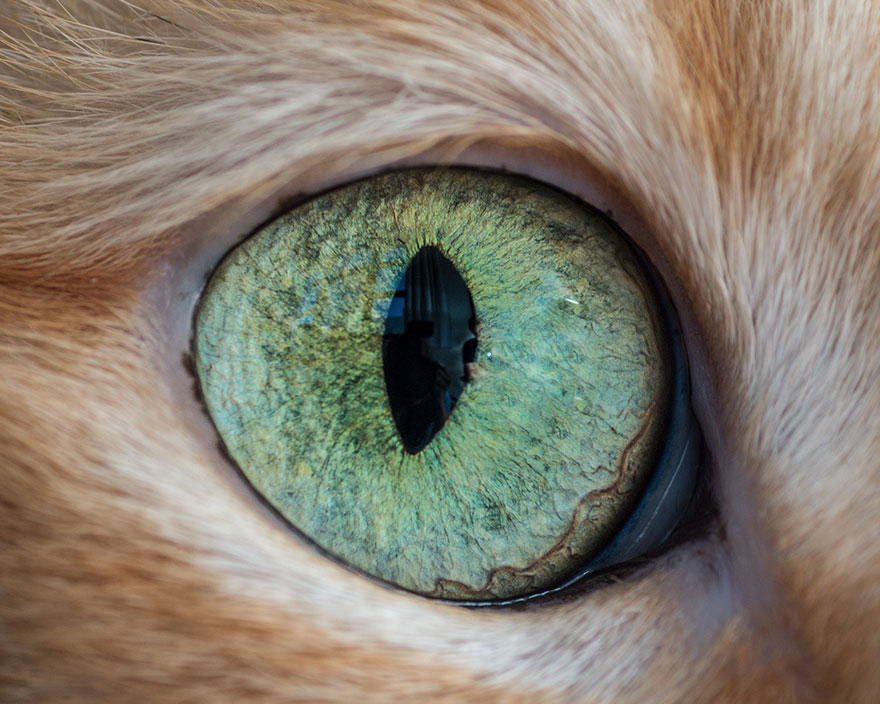 I-Take-Hypnotizing-Macro-Shots-Of-Cats-Eyes-Up-Close-11