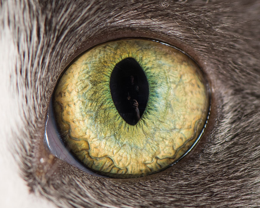 I-Take-Hypnotizing-Macro-Shots-Of-Cats-Eyes-Up-Close-12