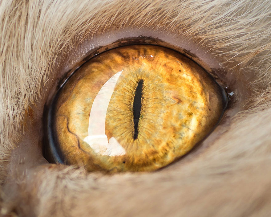 I-Take-Hypnotizing-Macro-Shots-Of-Cats-Eyes-Up-Close-13