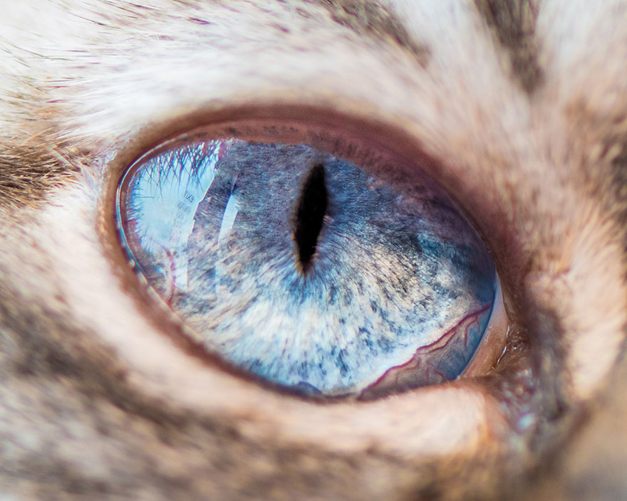 I-Take-Hypnotizing-Macro-Shots-Of-Cats-Eyes-Up-Close-14