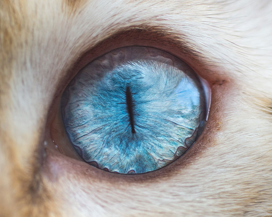 I-Take-Hypnotizing-Macro-Shots-Of-Cats-Eyes-Up-Close-2