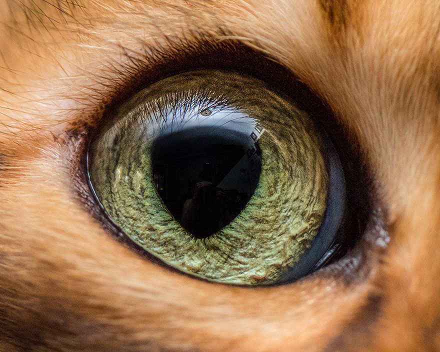 I-Take-Hypnotizing-Macro-Shots-Of-Cats-Eyes-Up-Close-3