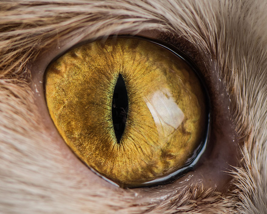 I-Take-Hypnotizing-Macro-Shots-Of-Cats-Eyes-Up-Close-4