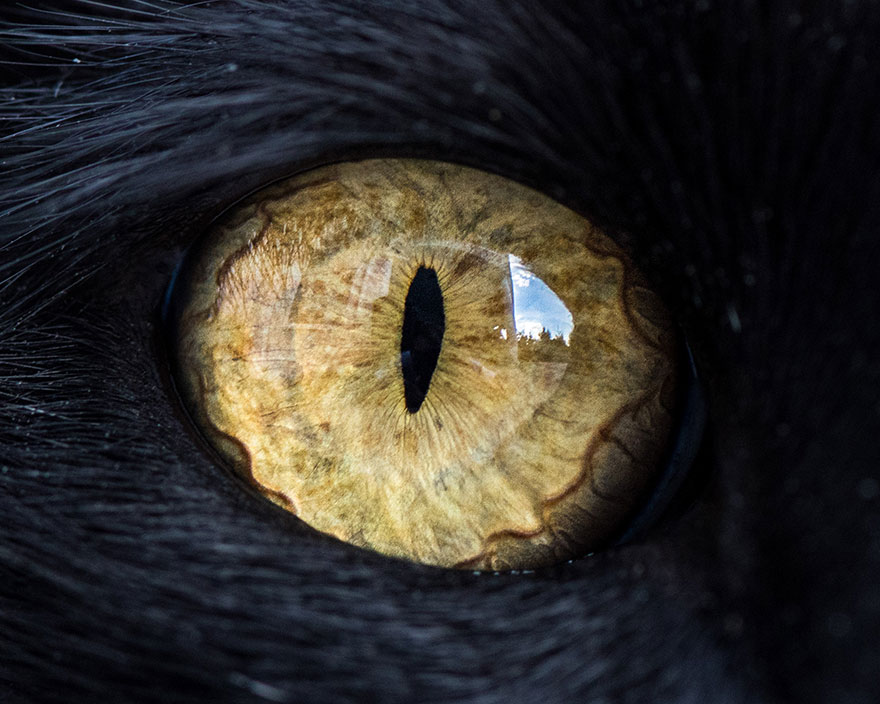 I-Take-Hypnotizing-Macro-Shots-Of-Cats-Eyes-Up-Close-5