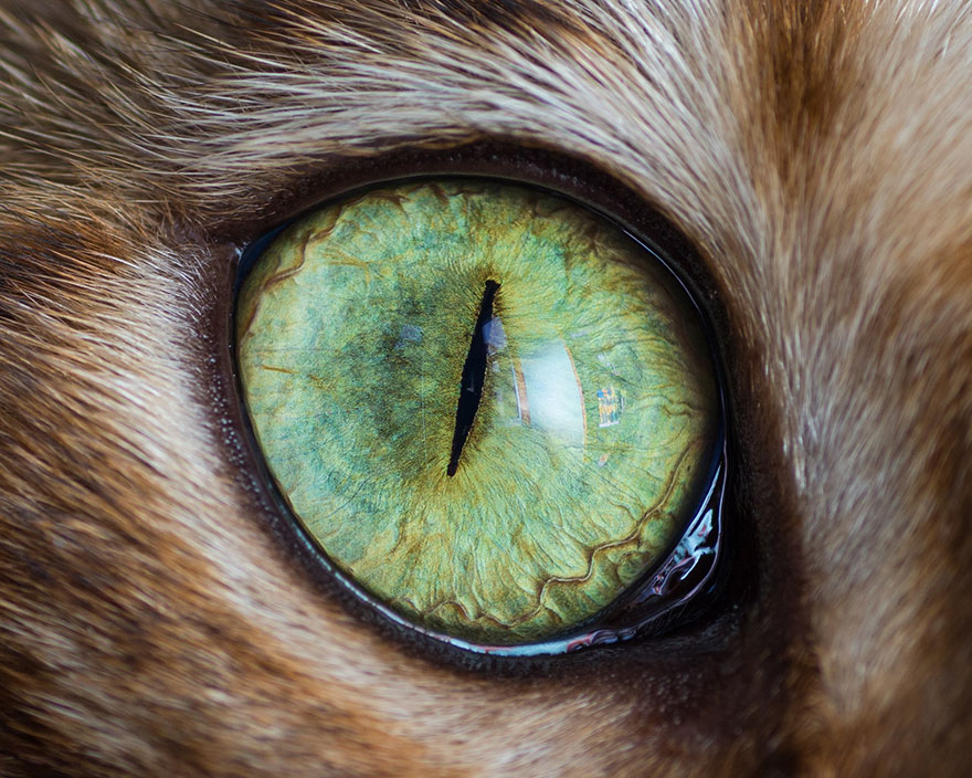 I-Take-Hypnotizing-Macro-Shots-Of-Cats-Eyes-Up-Close-6