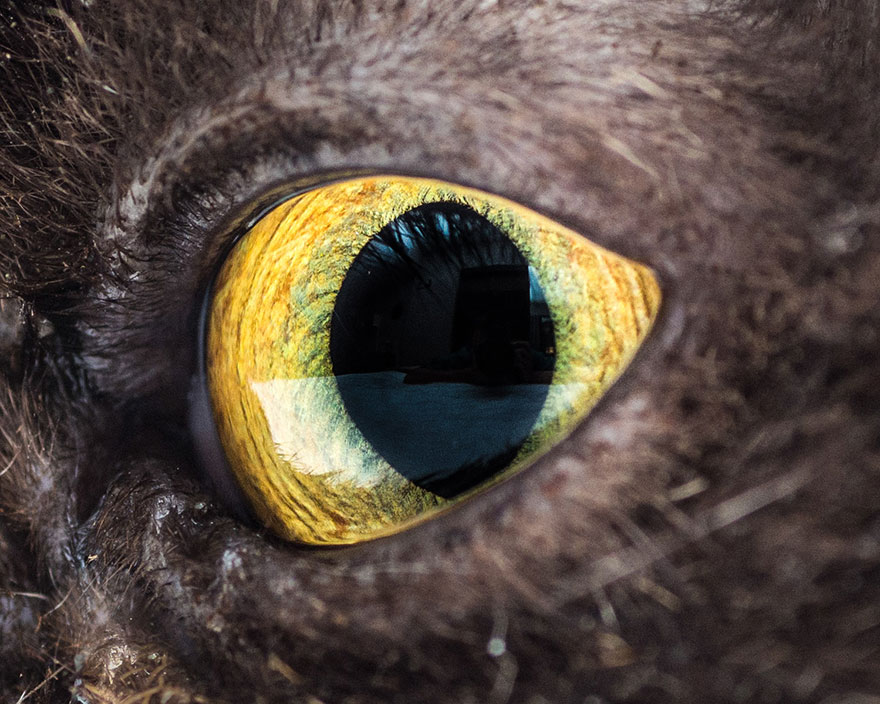 I-Take-Hypnotizing-Macro-Shots-Of-Cats-Eyes-Up-Close-7