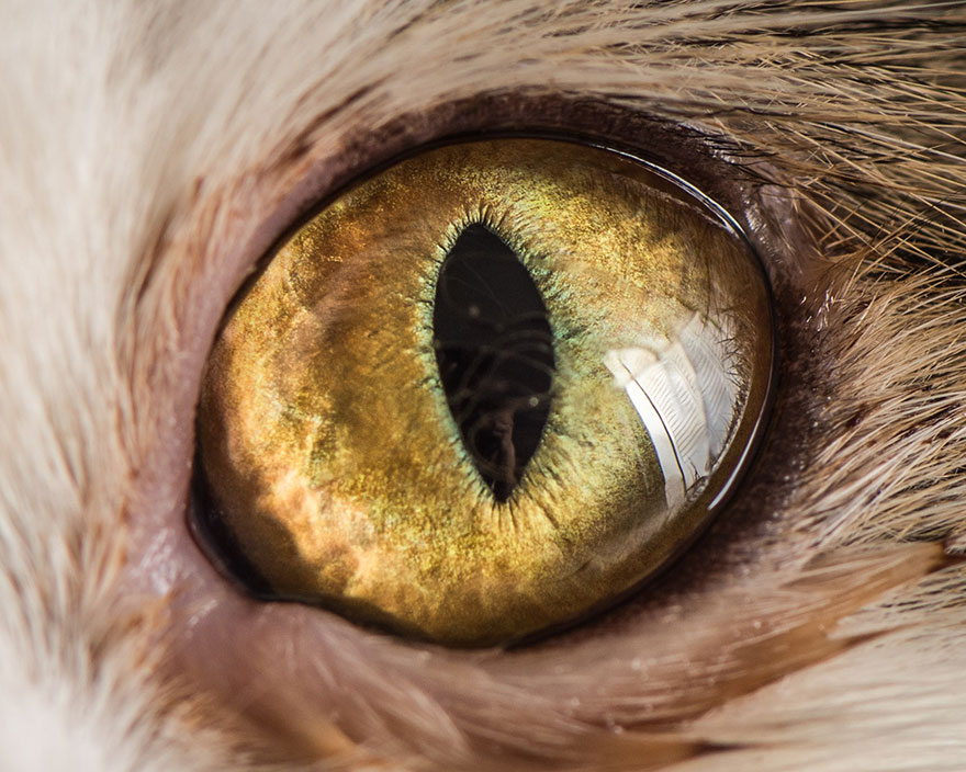 I-Take-Hypnotizing-Macro-Shots-Of-Cats-Eyes-Up-Close-9
