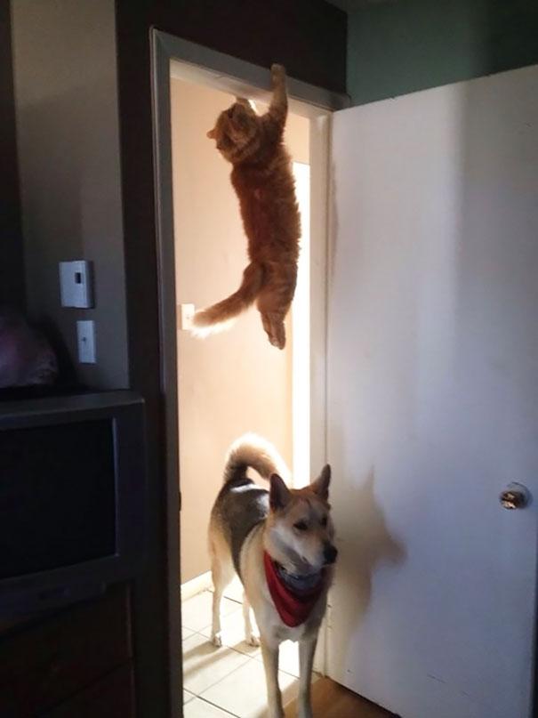 Ninja-Cats-1