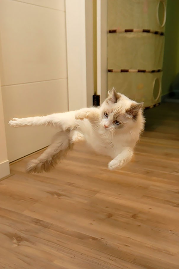 Ninja-Cats-14