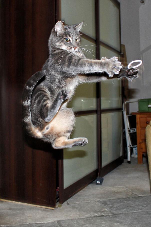 Ninja-Cats-21