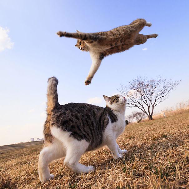 Ninja-Cats-22