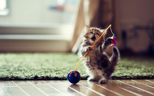 Ninja-Cats-3