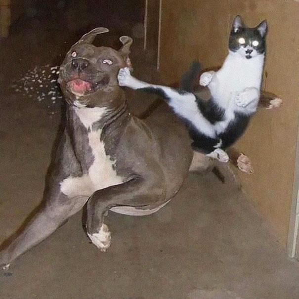 Ninja-Cats-4