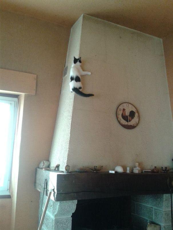 Ninja-Cats-8
