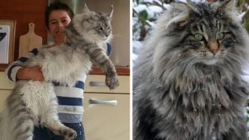 big-cats-maine-coons-fb3