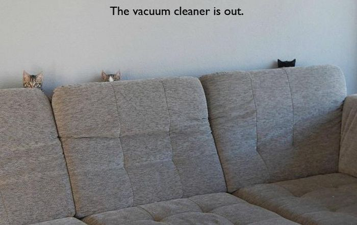 cat-owner-10