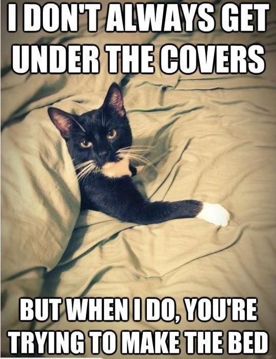 cat-owner-11
