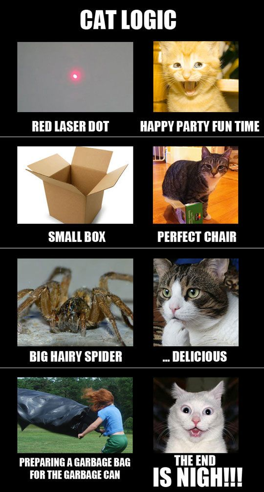 cat-owner-19
