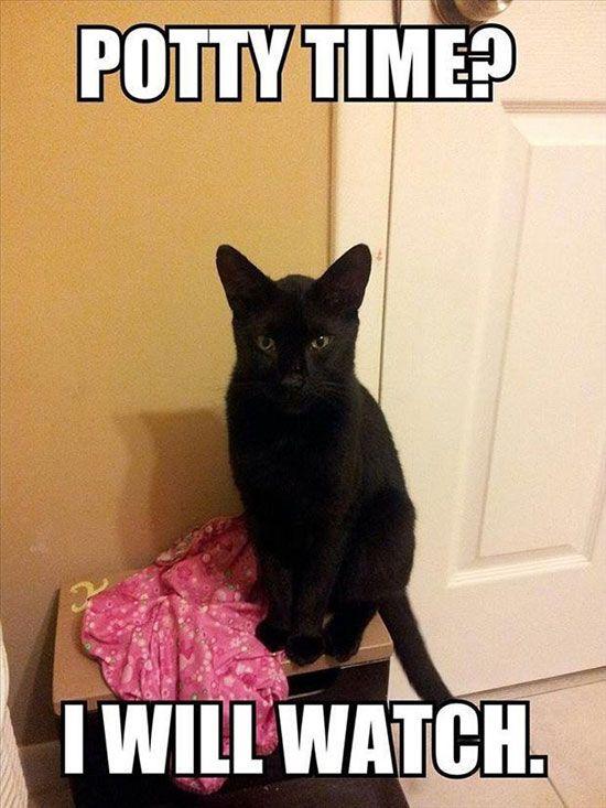 cat-owner-23