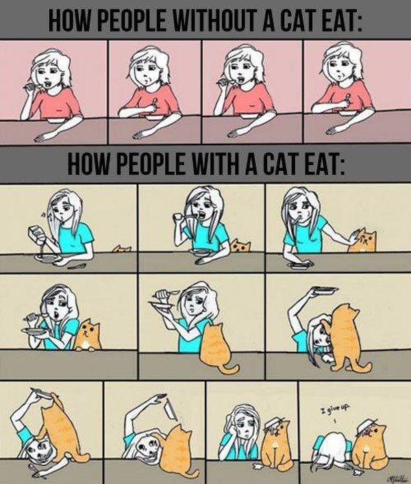 cat-owner-29