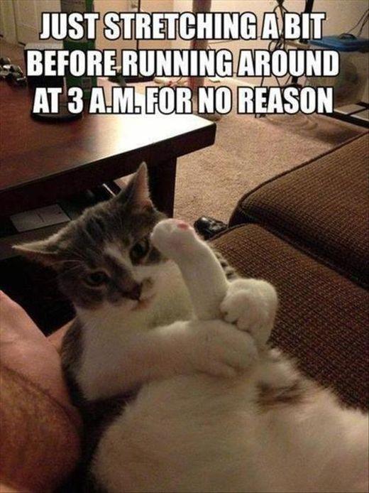 cat-owner-30