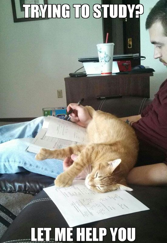 cat-owner-4