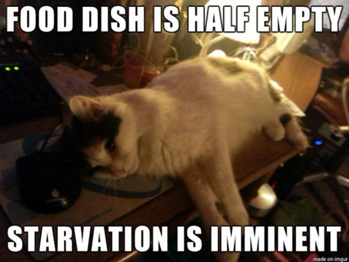 cat-owner-6