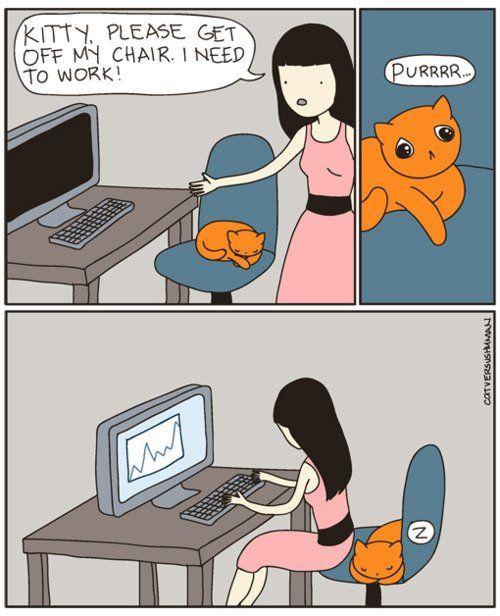 cat-owner-7