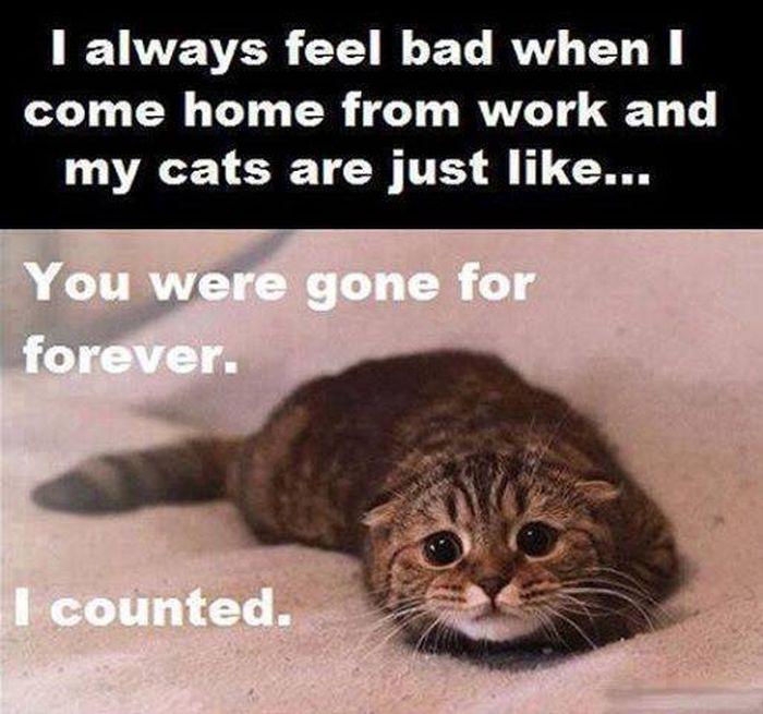 cat-owner-9