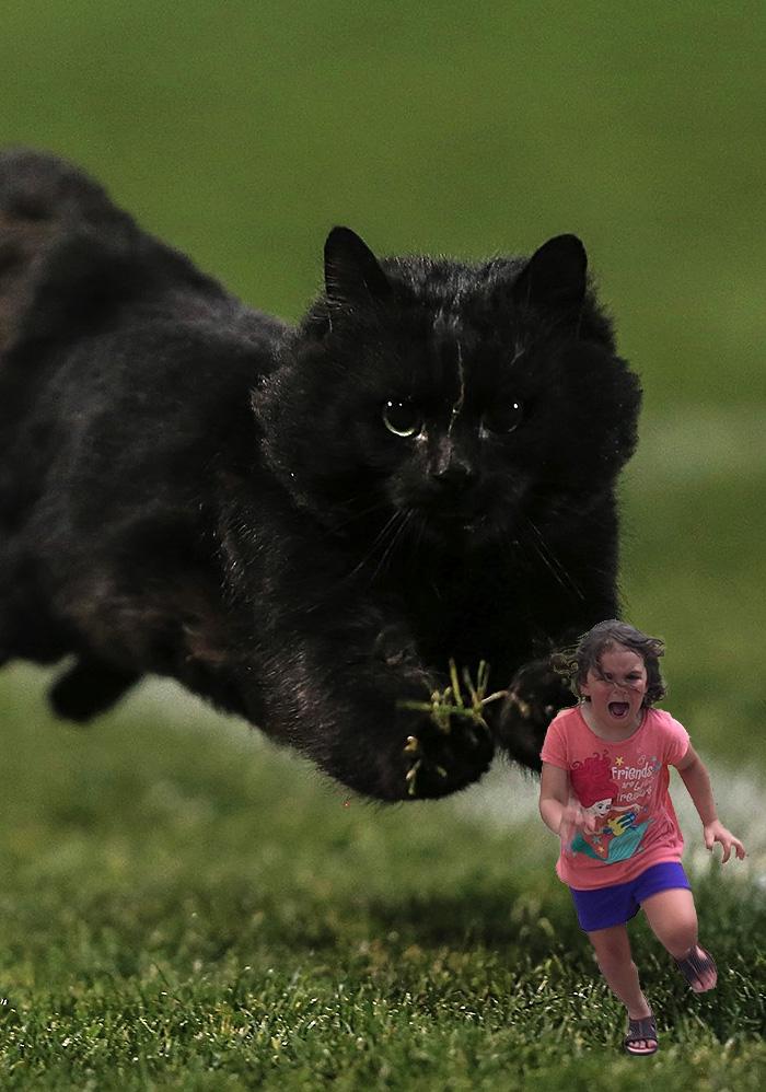 cat-photoshop-battle-1