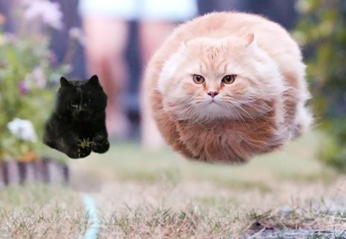 cat-photoshop-battle-15