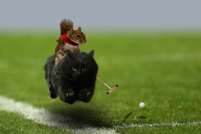 cat-photoshop-battle-18