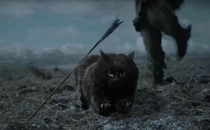 cat-photoshop-battle-2