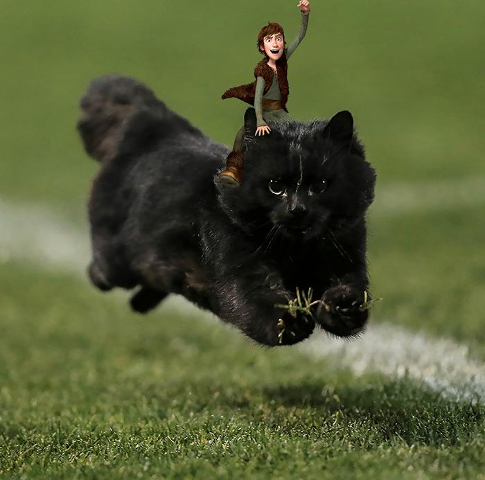 cat-photoshop-battle-21