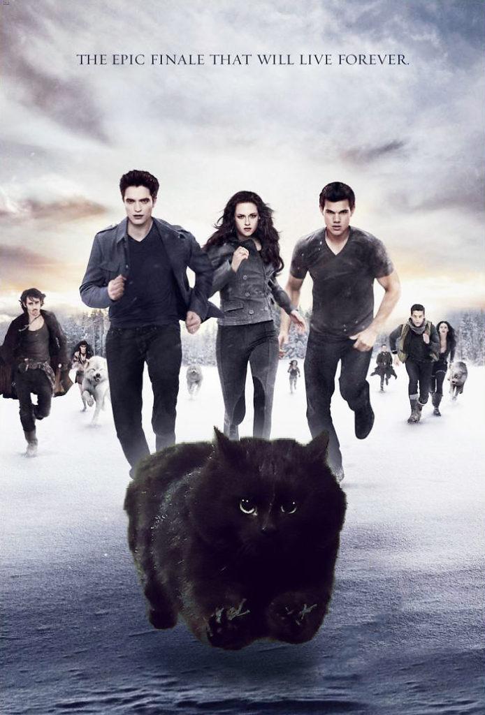 cat-photoshop-battle-23