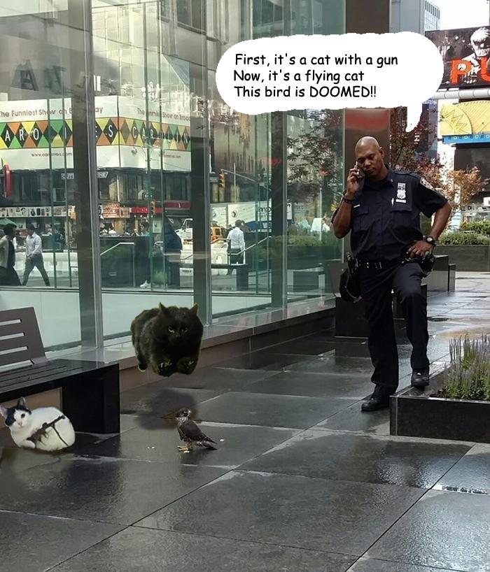cat-photoshop-battle-24