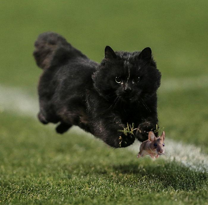 cat-photoshop-battle-25