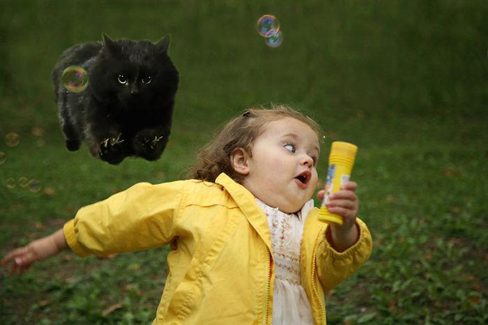 cat-photoshop-battle-29