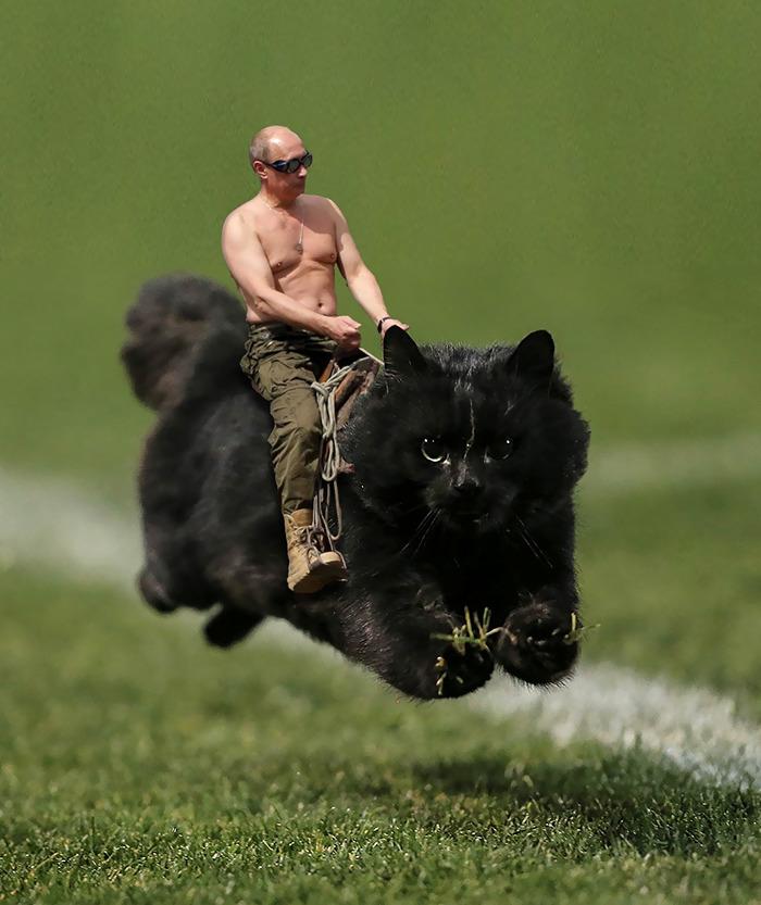 cat-photoshop-battle-3