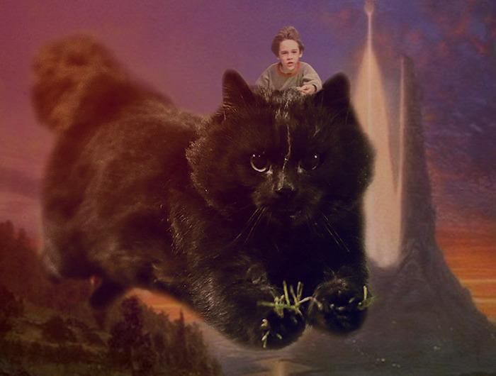 cat-photoshop-battle-5