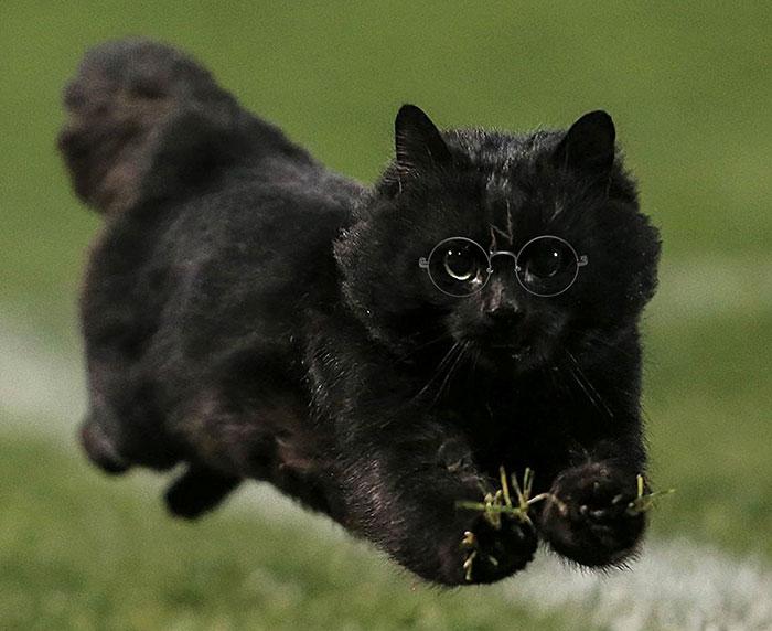 cat-photoshop-battle-6