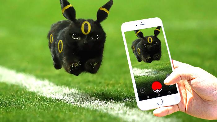 cat-photoshop-battle-7