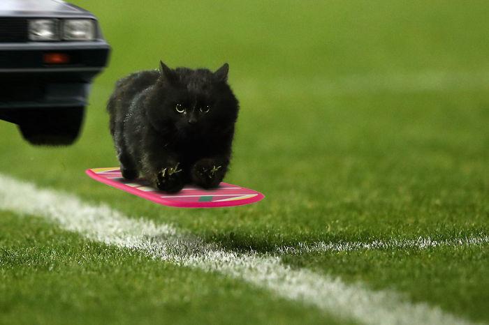 cat-photoshop-battle-8