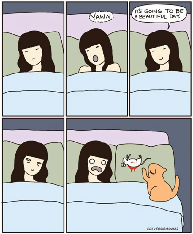 comic-strips-explaning-cats-10