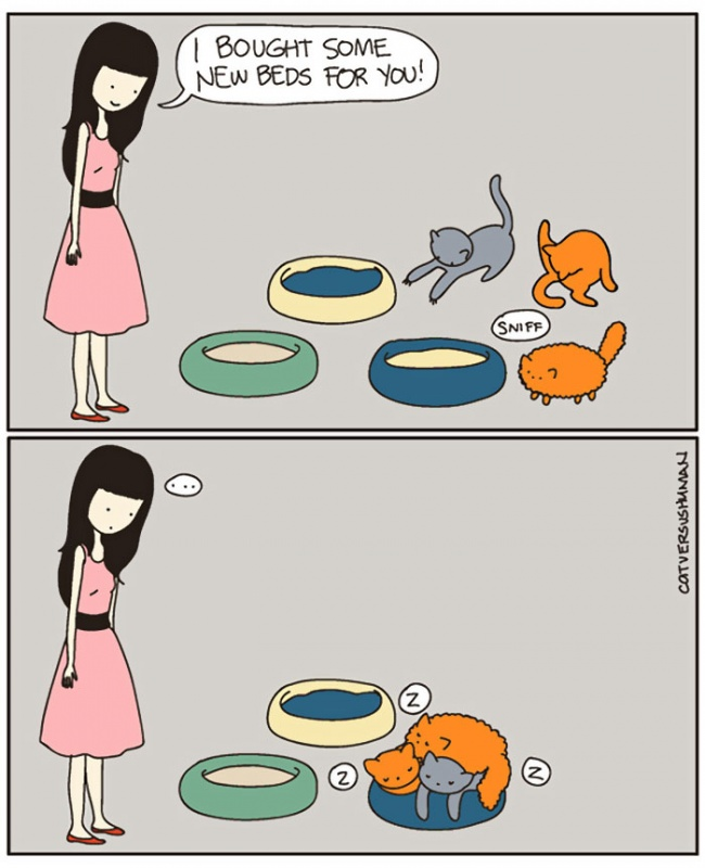 comic-strips-explaning-cats-11
