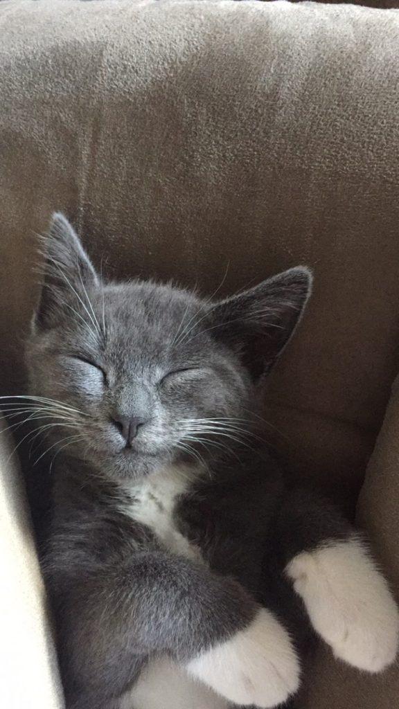 cute-kittens-2016-1
