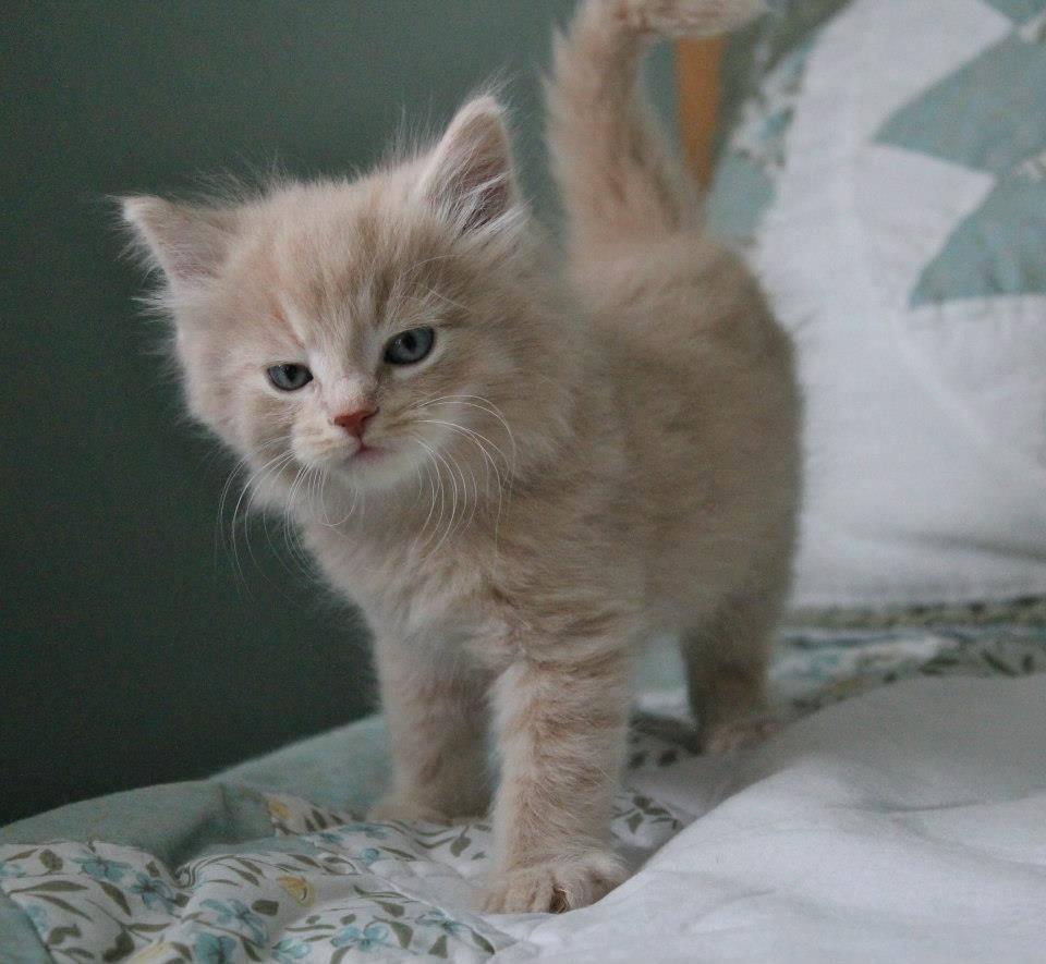 cute-kittens-2016-10
