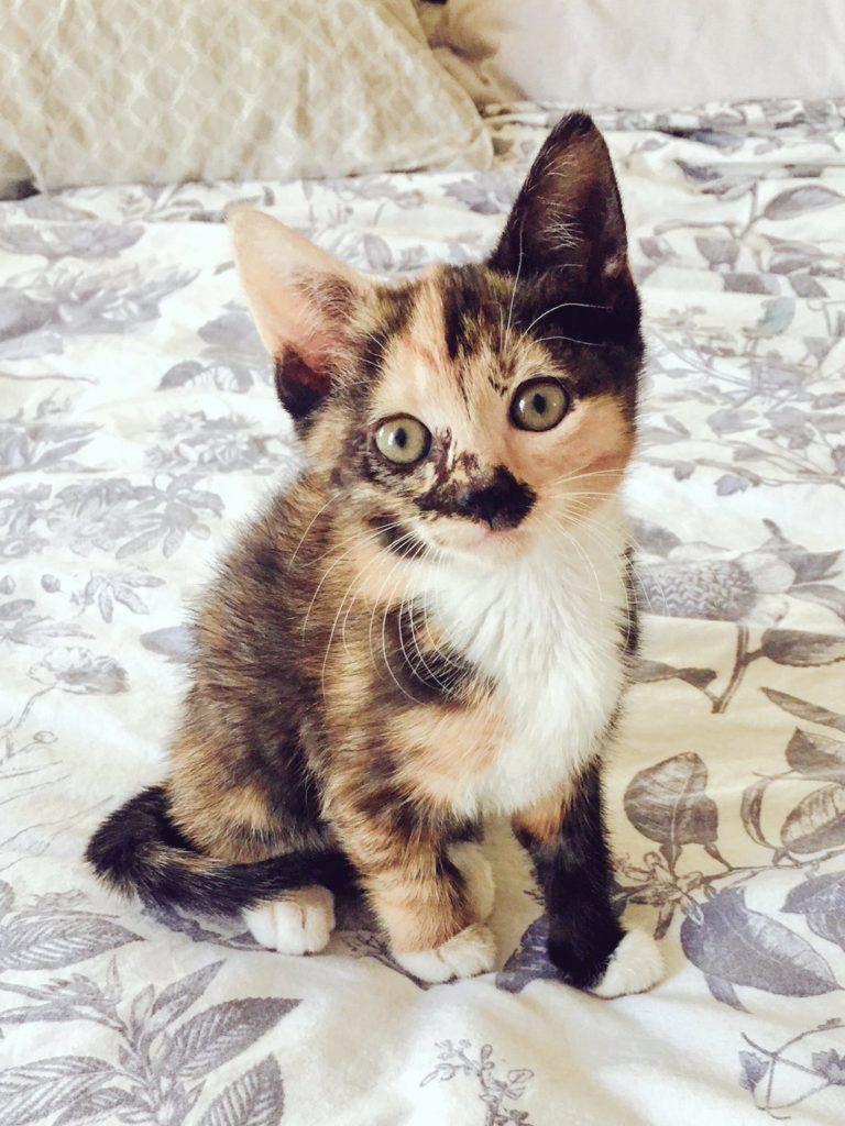 cute-kittens-2016-13